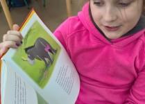 Dziewczynka z klasy 3 czyta i pokazuje dzieciom ilustracje z bajki o Kubusiu Puchatku