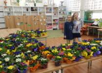 Kiermasz kwiatów. W sali na ławkach stoją doniczki z kolorowymi prymulkami, dwie dziewczynki pozują do zdjęcia.