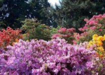 kwiaty w arobretrum kórnickim